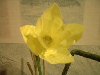 Finished Daffodil